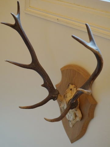 Trophée de chasse Pierre Prevost